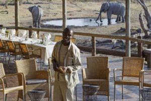 savuti safari lodge staff elephant