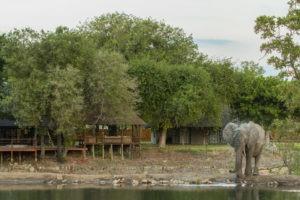 senalala klaserie elephant camp
