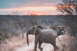 South-Africa-Elephant-Game-Drive-Car