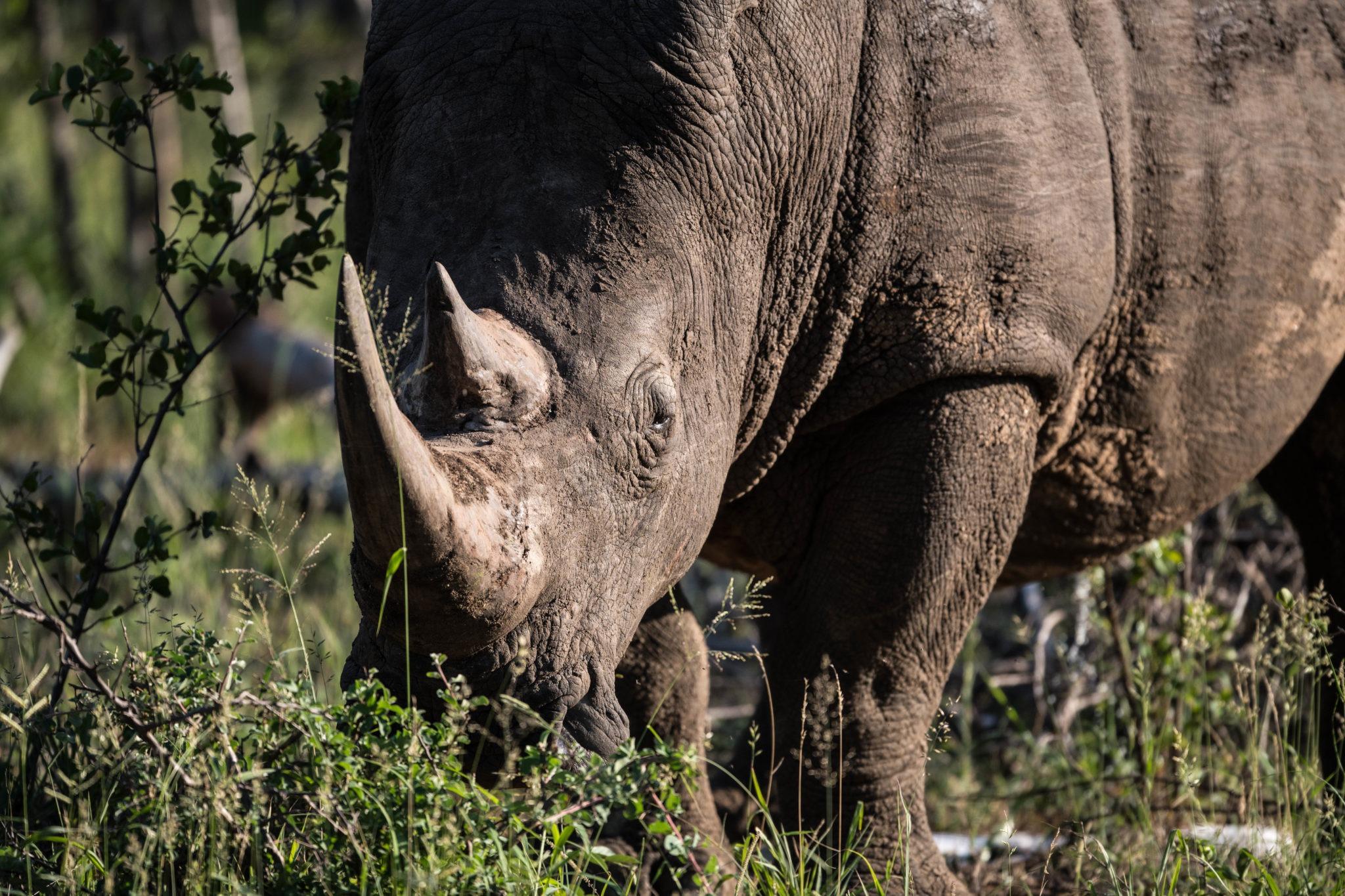 Blog Reto Rhino
