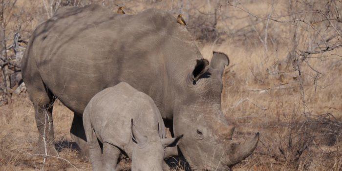 Blog Sabrina Rhino