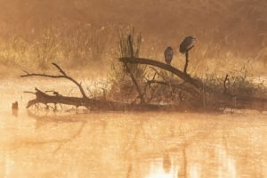 Chris Collin Birds Sunset