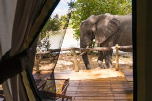 safari with gesa and frank elephant in front of tent