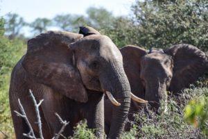 Kruger-Elephant-South-Africa