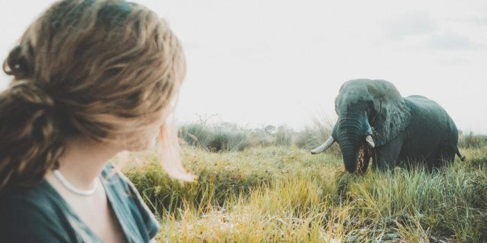 Gesa Elephant Chobe