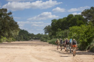 Greater kruger national park walking safari