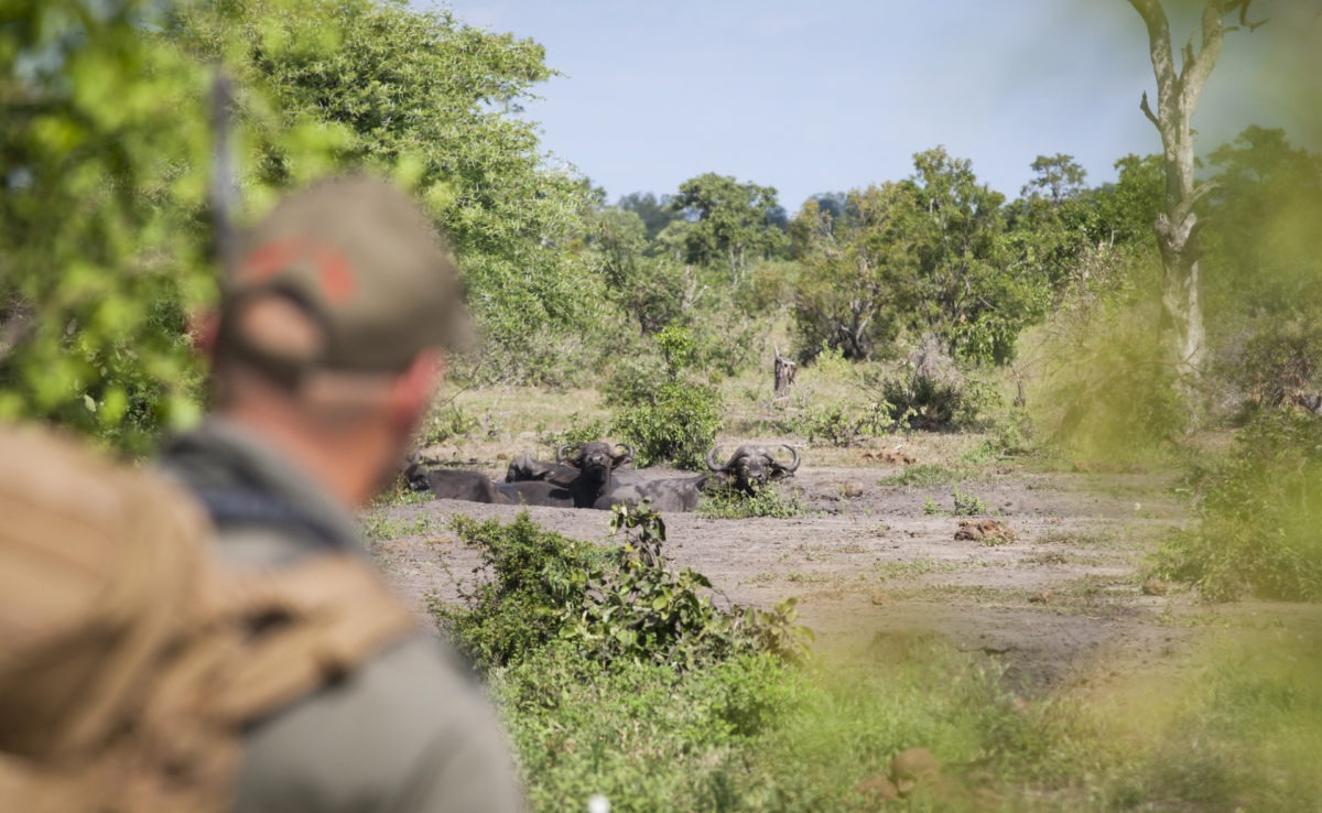 Greater kruger national park walking safari wildlife