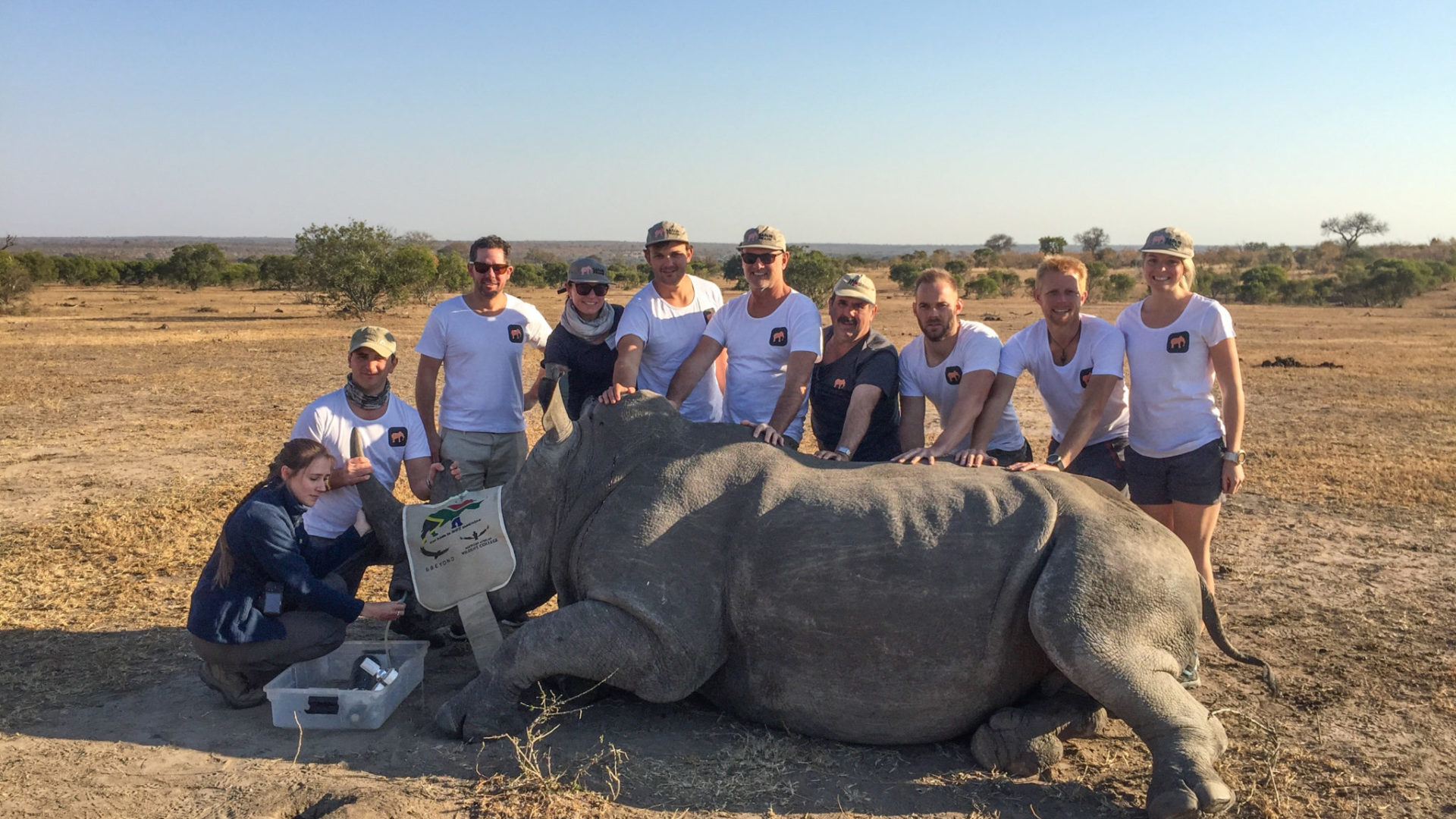 Greater kuger national park rhino notching