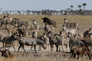 Makgadikgadi Botswana horse riding migration ride