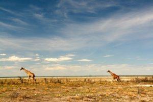 Namibia 353