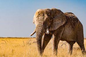 Northen Namibia etosha safari