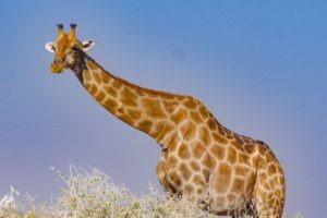 Northern Namibia Etosha wildlife photography