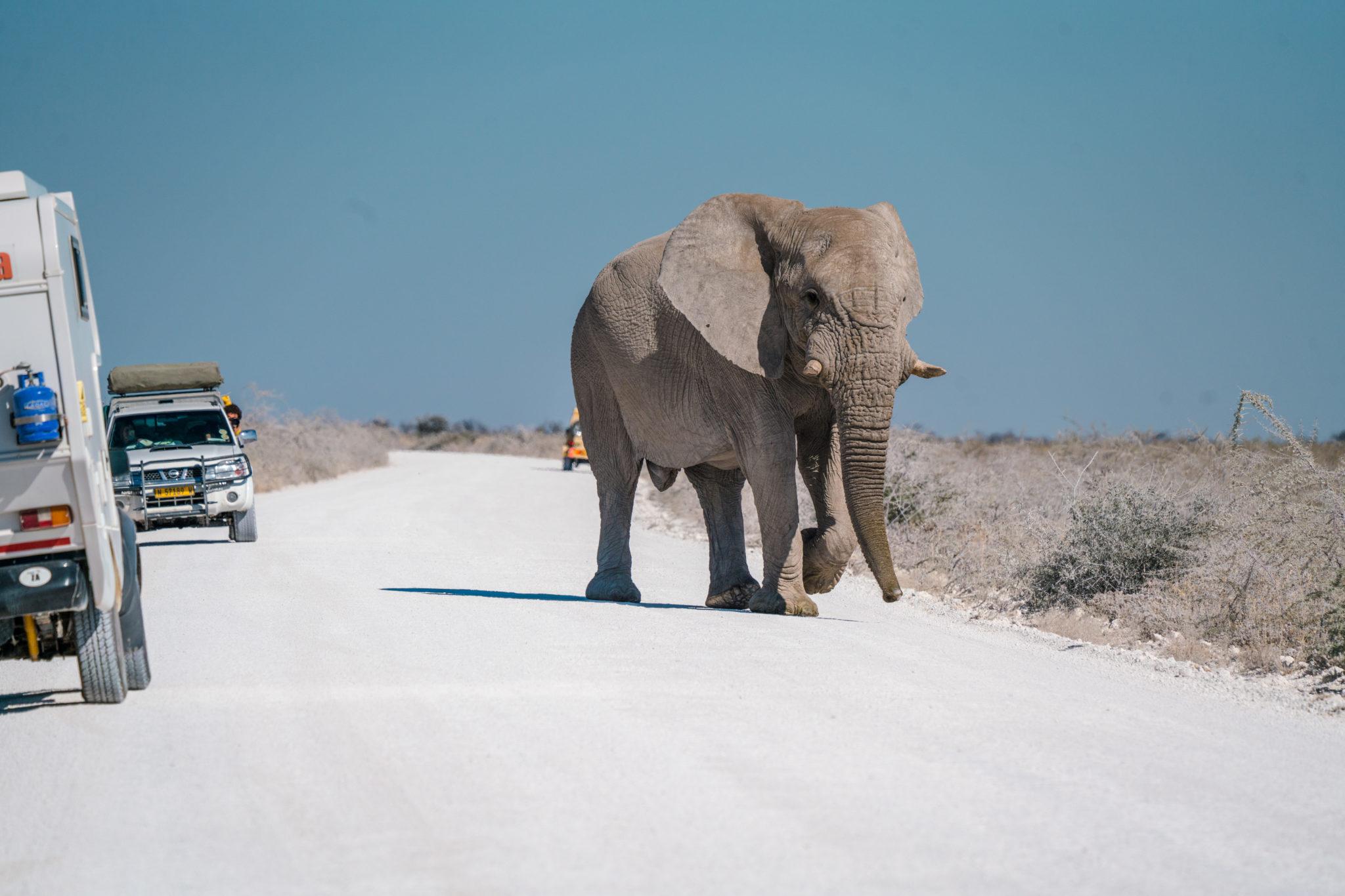 Northern Namibia etosha frank and gesa photography