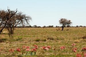 Northern Namibia Etosha green