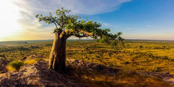 Northern Tuli Mashatu Botswana Views