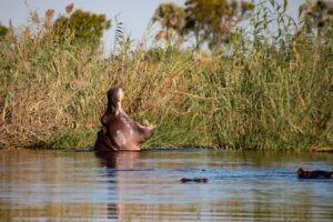 Nothern Botswana Chobe Hippo Boating Safari