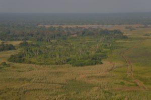 Zambia Kasanka
