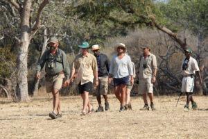 camp zambezi mana pools group walking