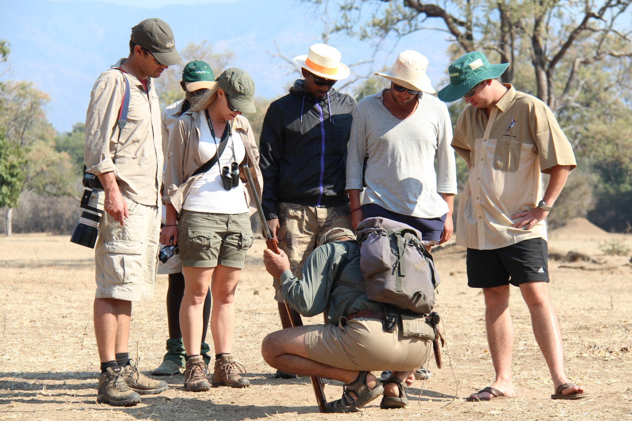 camp zambezi mana pools guide tracks
