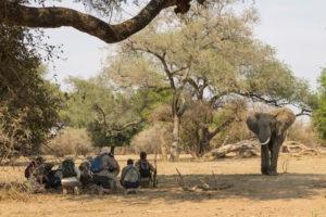 camp zambezi mana pools walking safari