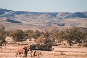 damaraland elephants namibia
