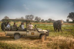 golden africa safaris elephant khwai
