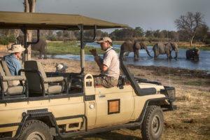 golden africa safaris elephant swimming