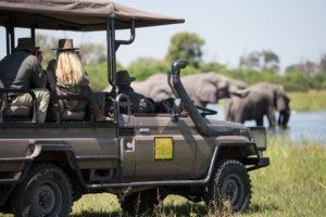 golden africa safaris gamedrive elephant