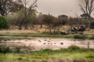golden africa safaris hippos