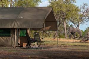 golden africa safaris tent elephant
