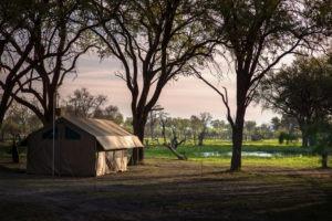 golden africa safaris tent khwai