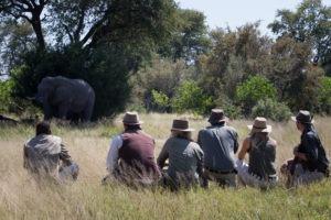 golden africa safaris walking safari elephant