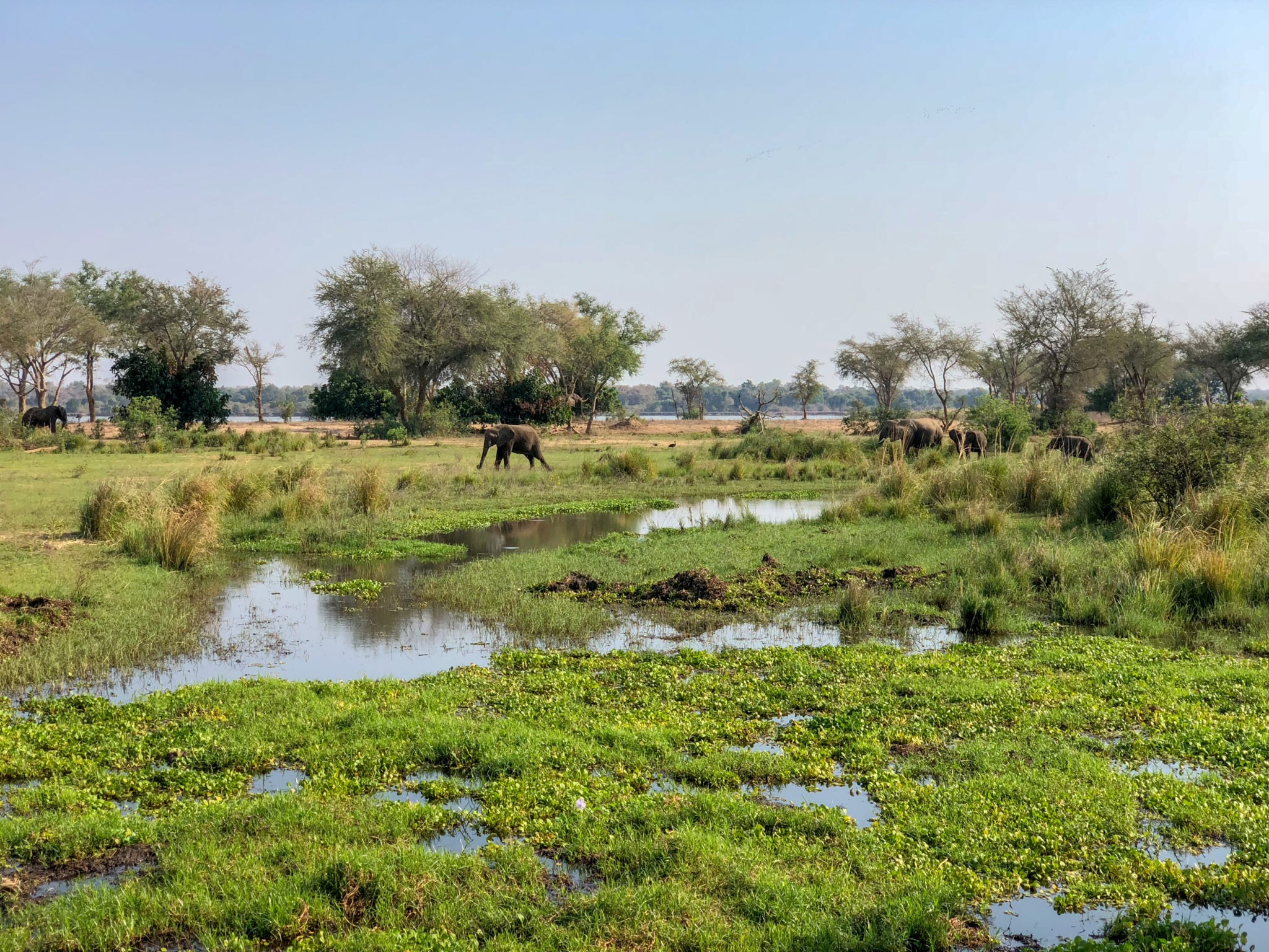 lower zambezi tusk and mane landscape elephant