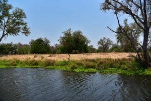 lower zambezi tusk and mane river tent