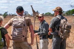 lowveld trails timbavati giraffe guests wayne guide
