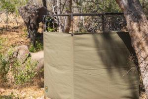 lowveld trails timbavati shower elephants