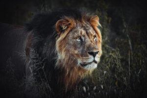 northen namibia erindi jason and emilie photography safari lion