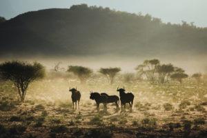 northen namibia erindi jason and emilie wildlife photography