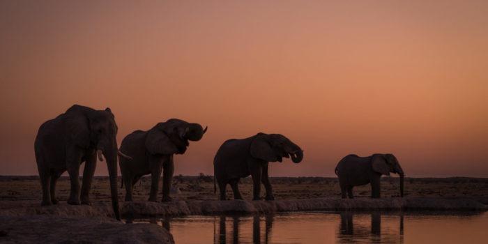 nxai pan four elephants sunset