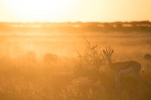 nxai pan springbok sunset