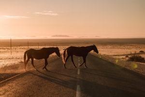 southern namibia wild horses luderitz jason and emilie safari
