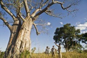 west zambia Mukambi Safari Lodge Walking Safari Kafue