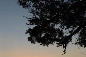 west zambia busanga sunset safari