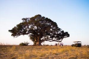 west zambia kafue busanga game drive safari