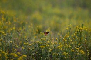 west zambia liuwa plains wildlife photography butterfly flowers