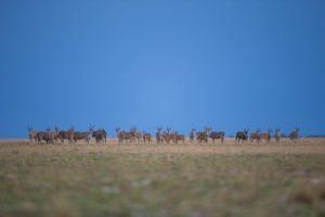 west zambia liuwa plains wildlife photography eiland