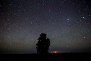 west zambia liuwa plains wildlife photography under the stars