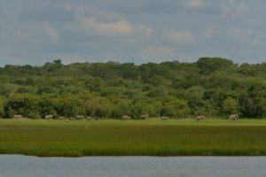 zambia kasanka Elephant Lake Wasa