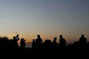 zambia kasanka bat migration experience