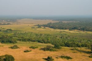 zambia kasanka national park